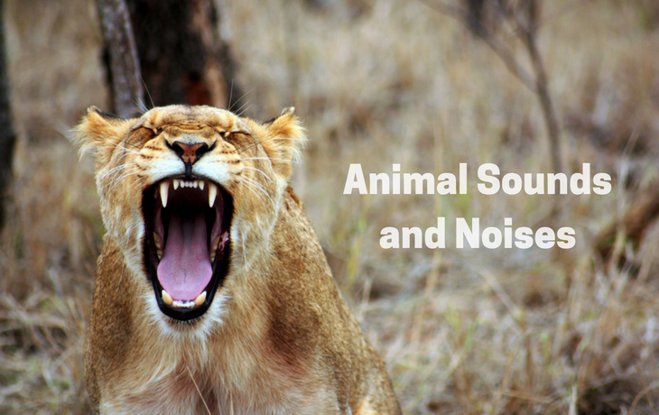 Animal Sounds and Noises Apps